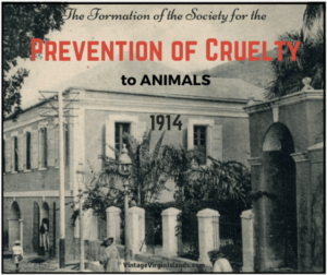 The formation of the Prevention of Cruelty to animals in St. Thomas, Danish West Indies ~ 1914 By Valerie Sims