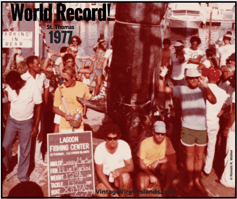 On Aug 6, 1977, a new world record Blue Marlin was caught off St. Thomas, US Virgin Islands. By Valerie Sims